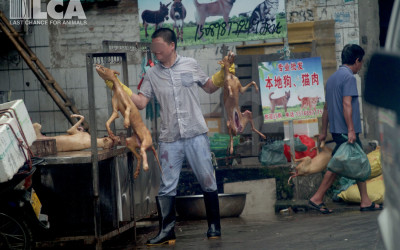 A man holds dead dogs in Yulin, June 2015