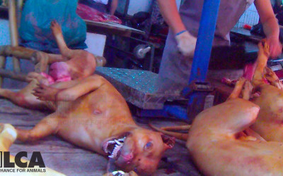 Dead dog on butcher's table in Yulin, June 2015