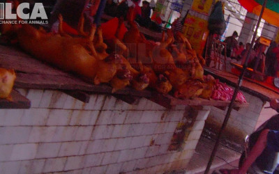 A pile of dead dogs on a table in Yulin, June 2015
