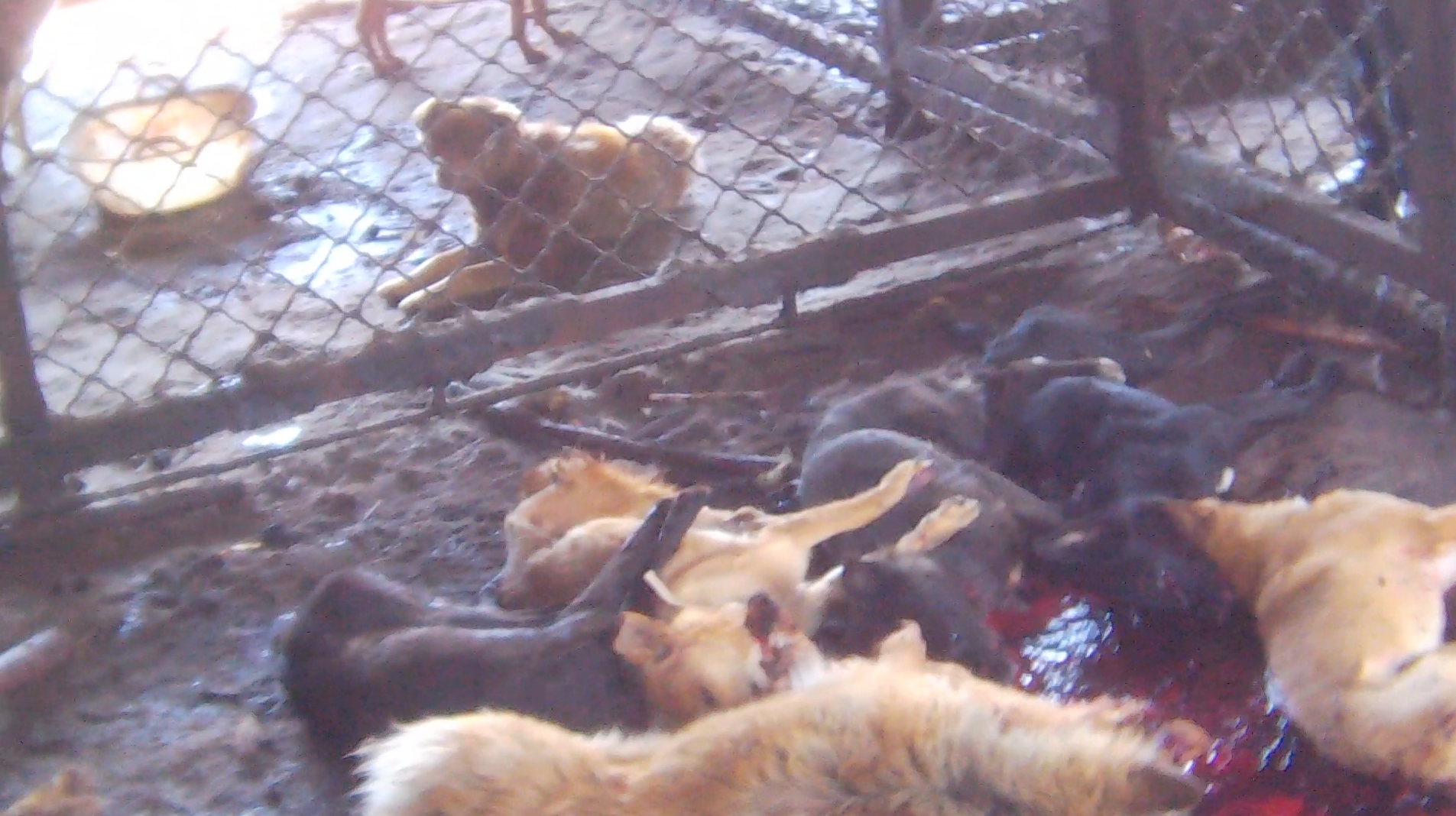 Stop Now to Stop Dog Meat - photo#8