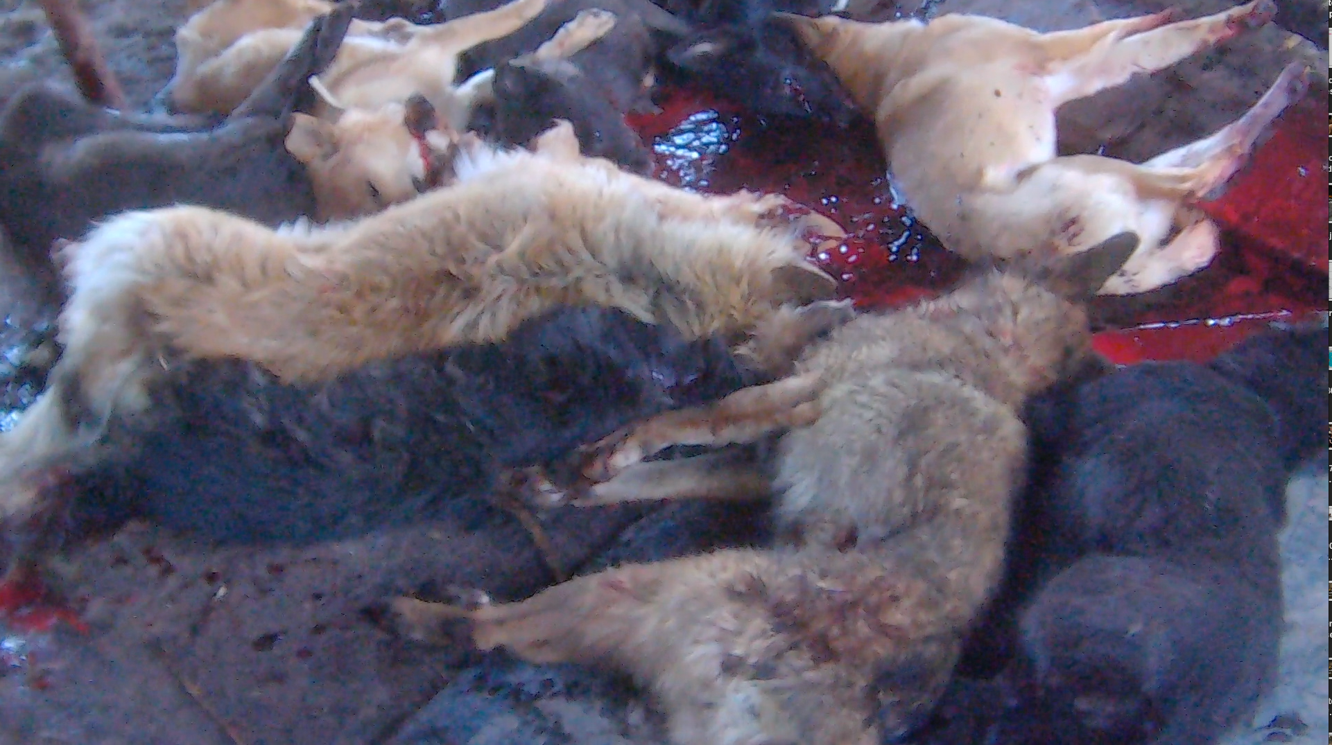 Sign Now to Stop Dog Meat - photo#5