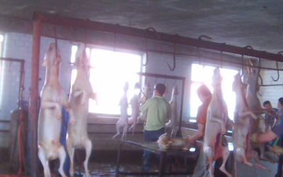Chinese Dogs, Dead and Burned, Hanging