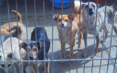 Dogs in holding pen at Chinese dog slaughterhouse