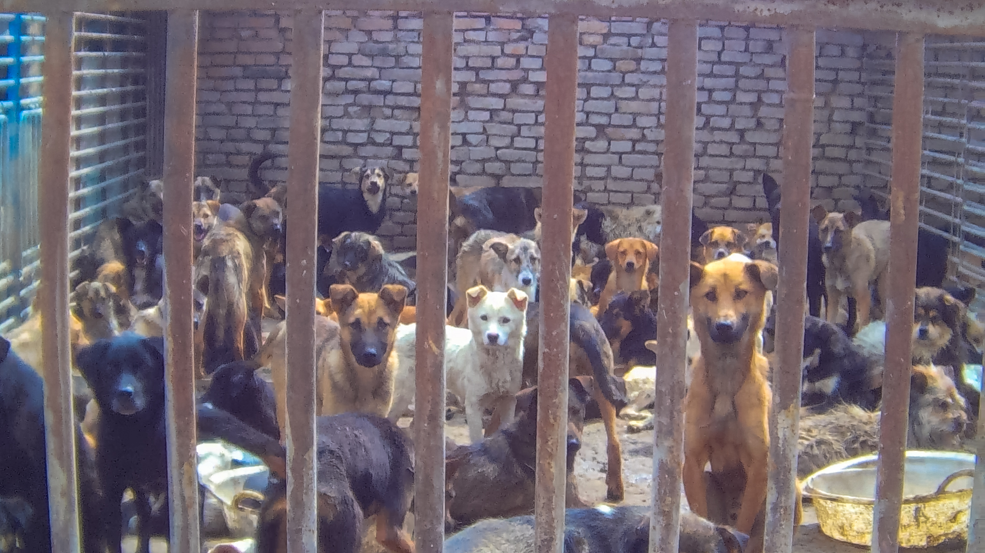 Stop Now to Stop Dog Meat - photo#10