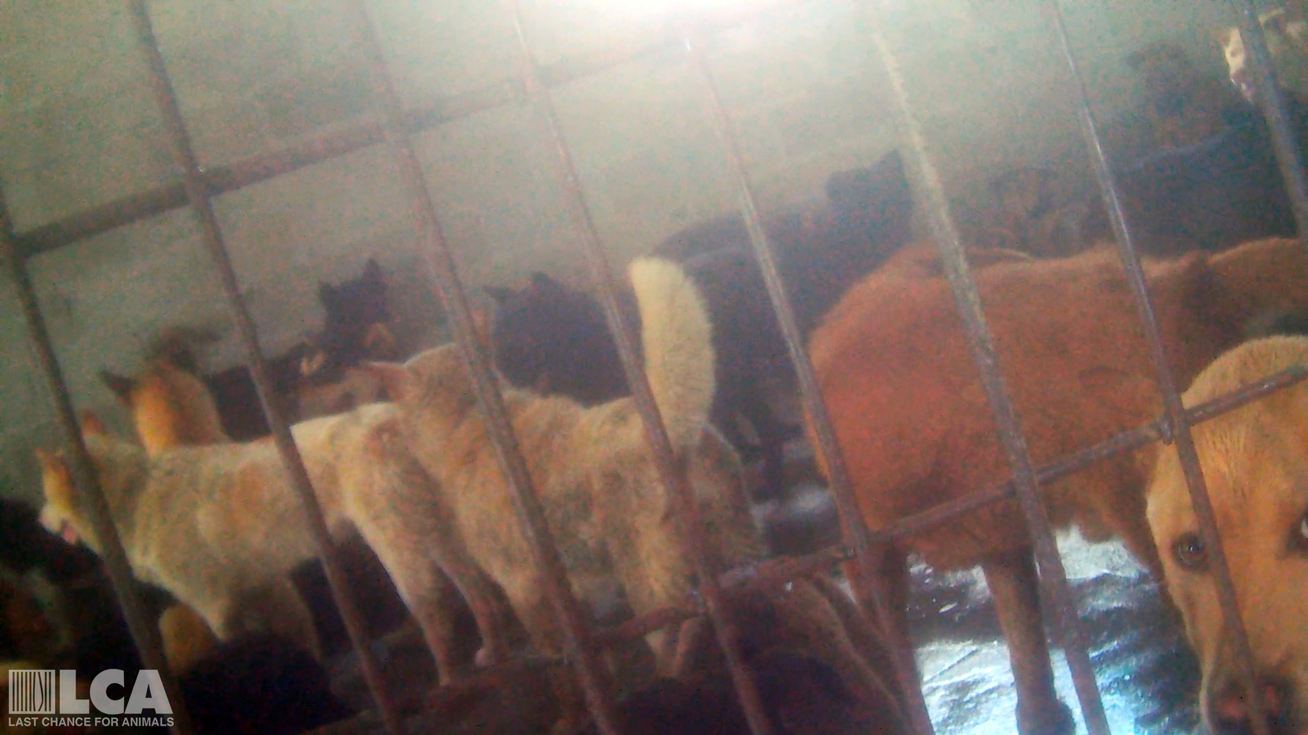 Sign Now to Stop Dog Meat in China! - photo#28