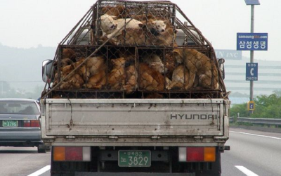 Dogs piled onto a truck for Korean dog meat trade