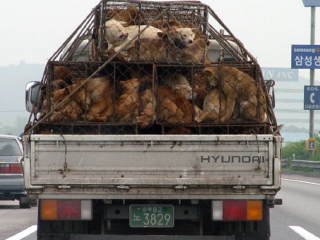 Dogs on truck3