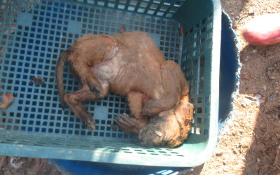 Victim of Korean dog meat trade