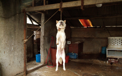 Dog hanged in Korean slaughterhouse