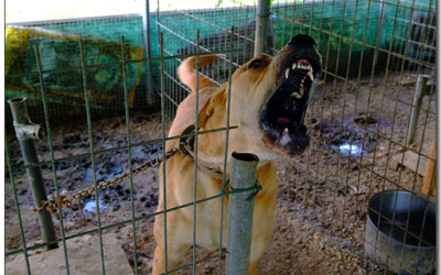 Dog to be slaughtered for meat in Korea