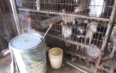 Dogs in S. Korean dog meat farm