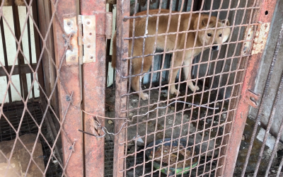 Dog in S. Korean dog meat farm