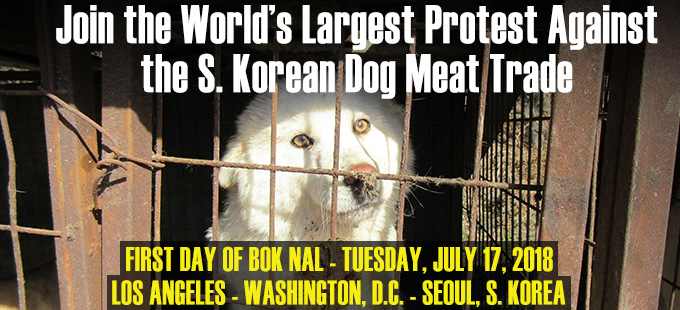 Join the Dog Meat Protests