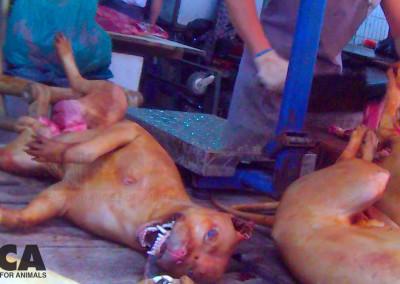 Dead dog on butcher's table in Yulin, June 2015