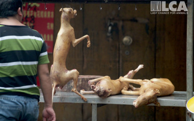 Dead dogs on hook and table in Yulin, June 2015
