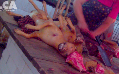 Woman butchers dead dogs in Yulin, June 2015
