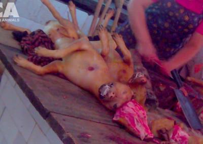 Woman butchers dead dogs in Yulin, June 2015