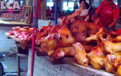 A pile of dead dogs on table in Yulin, June 2015