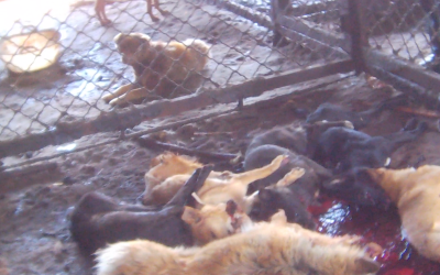 Pile of dead dogs at Chinese slaughterhouse
