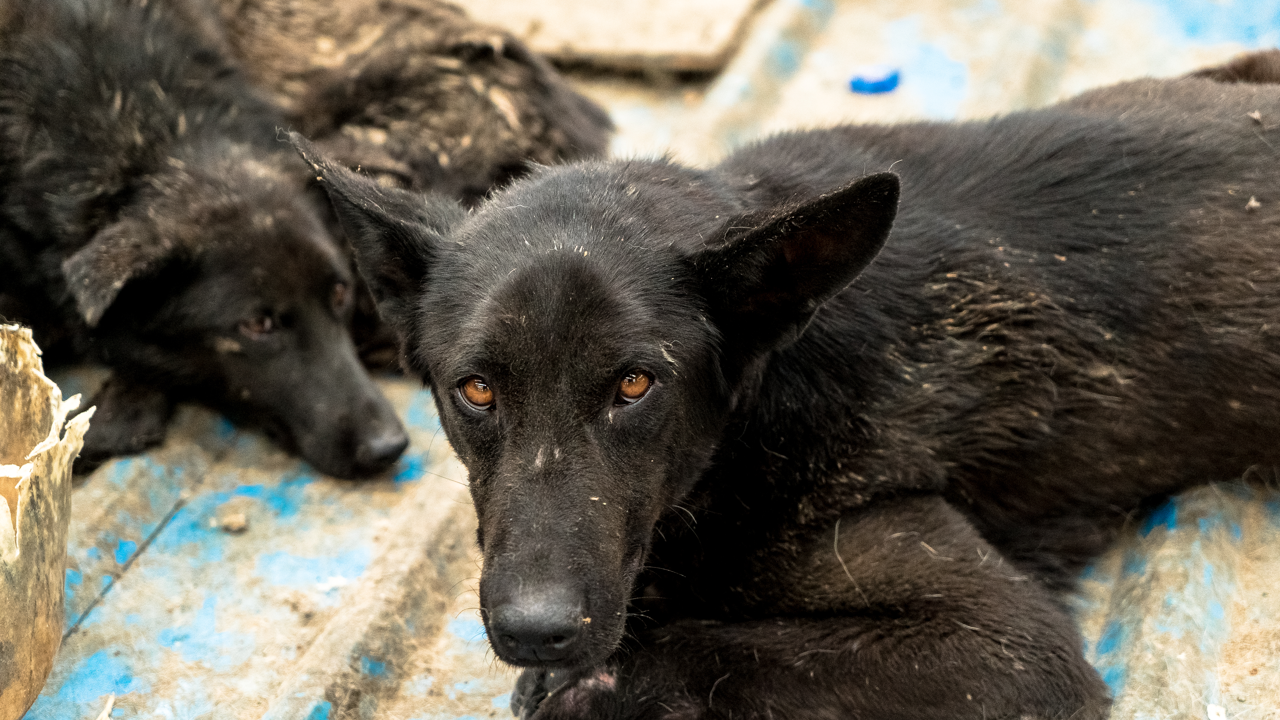 Sign Now to Stop Dog Meat