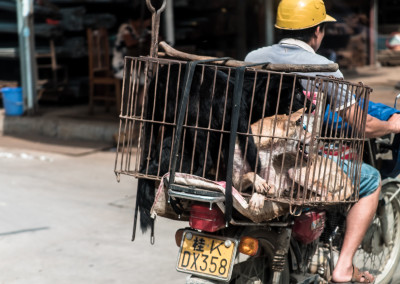 Live dogs tranpsorted in small cages to markets where they will be killed for the Yulin dog meat festival