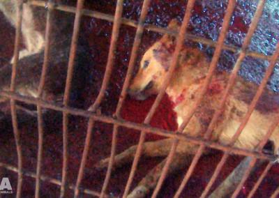 Dead dog at Yulin slaughterhouse, June 2016