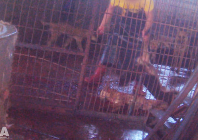 Dog being killed at Yulin slaughterhouse, June 2016