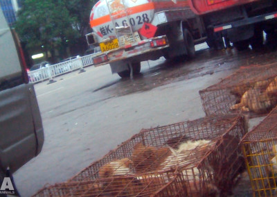 Dogs packed in cages at Yulin slaughterhouse, June 2016