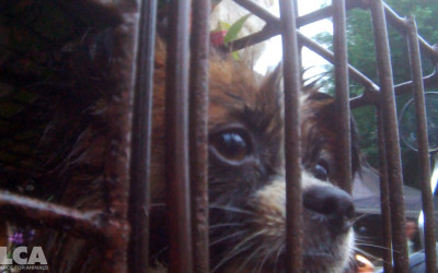 Dog in cage at Yulin slaughterhouse, June 2016