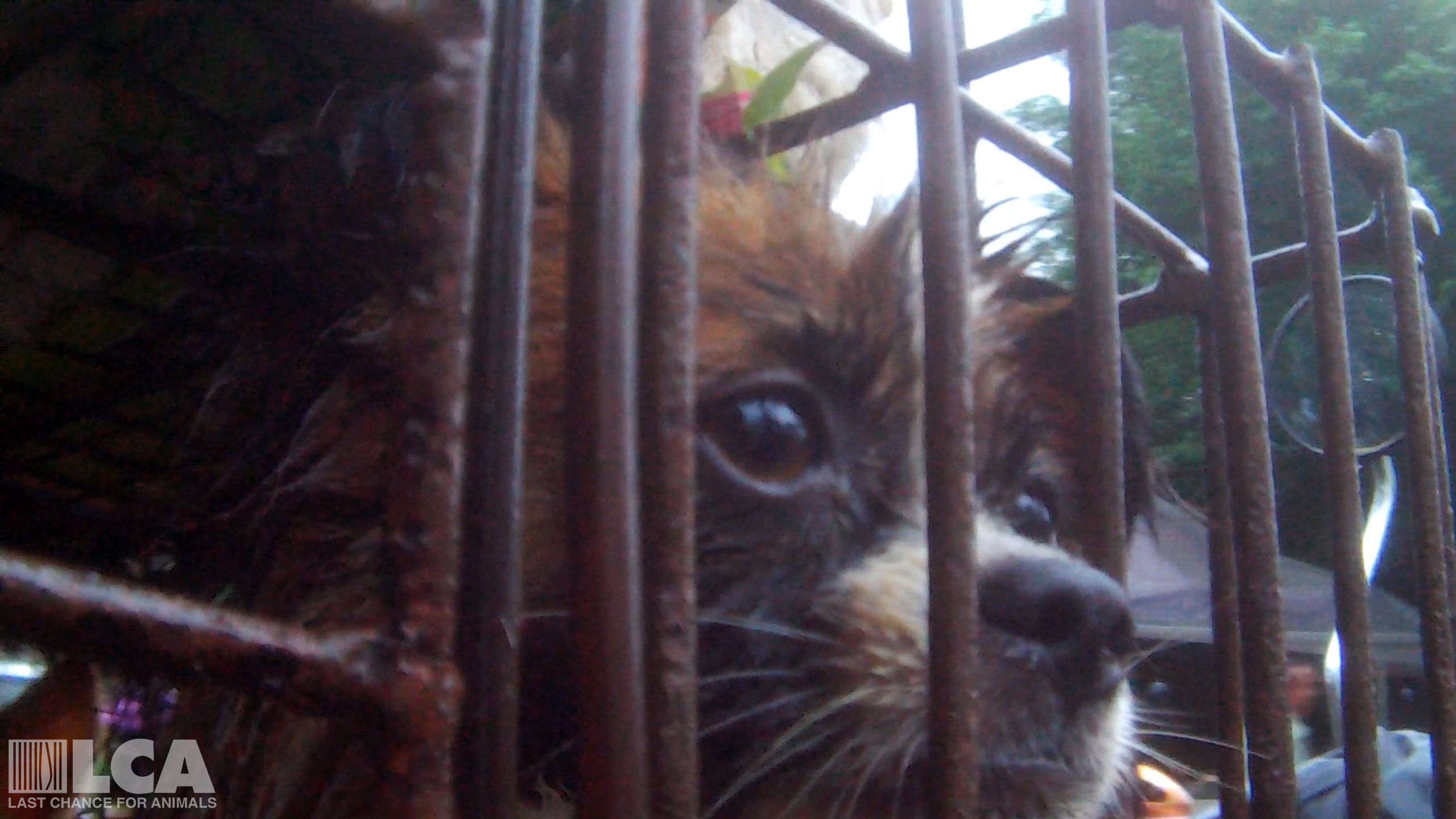 Sign Now to Stop Dog Meat in China!