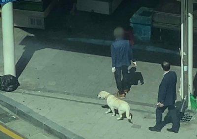 1 Moran Market - Live Dogs Enter