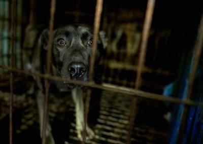 11 Dog Farm - Dog in Cage