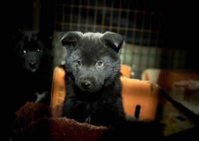 11a - Dog Farm - Dog in cage