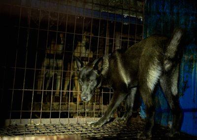 13 Dog Farm - Dog in Cage