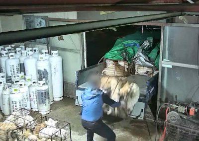 18 Dog Slaughterhouse - Unloading crates