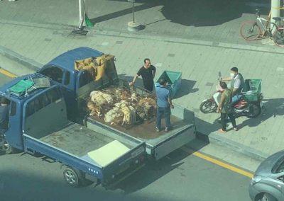 2 Moran Market - Live Dogs Gathered