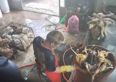 23 Dog Slaughterhouse - Watching each other be slaughtered