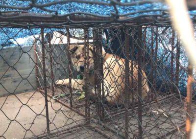 3 Moran Market - Live Dog in Transport Crate