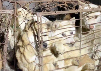 4 Moran Market - Live Dogs In Transport Crates
