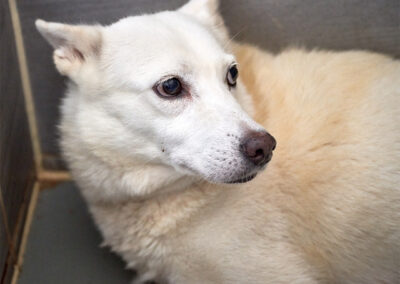 Chunsam, rescued from slaughterhouse