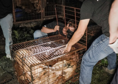 Dogs being rescued from cages during slaughterhouse raid